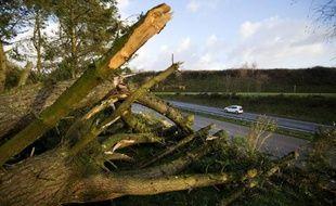 Un arbre arraché par la tempête Ulla, le 15 février 2014 à Pont-de-Buis en Bretagne