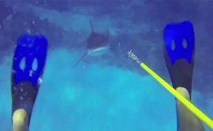 Capture d'écran d'une vidéo d'attaque de requin filmée par un plongeur