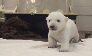 Capture d'écran d'une vidéo publiée par le zoo de Toronto, avec la nouvelle mascotte de l'établissement.