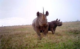 Des rhinocéros noirs au Kenya.