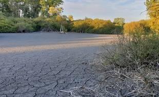 Une partie des marais de Fretin, près de Lille, victime de la sécheresse.