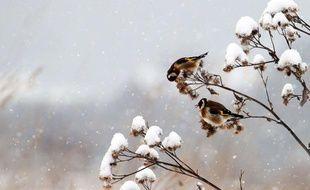 Des oiseaux en Slovaquie, en janvier 2012.