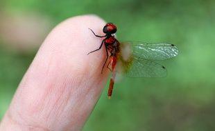 Une libellule à Sichuan, dans le sud ouest de la Chine, le 2 octobre 2020.