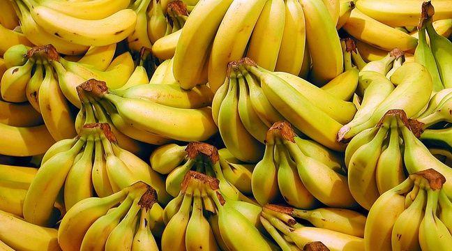 Bananes, illustration.  – SUPERSTOCK/SUPERSTOCK/SIPA