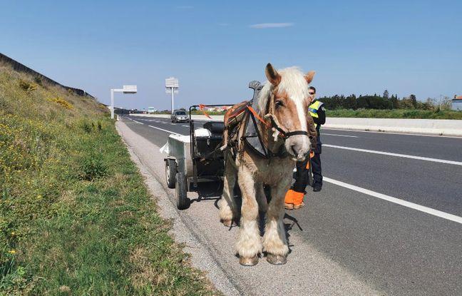 Perpignan : En plein confinement, il est intercepté sur la route sur un attelage tiré par un cheval