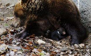 Plusieurs oursons sont nés cet hiver dans les Pyrénées, dont deux ont été pris en photo avec leur mère, Caramelles, a-t-on appris jeudi auprès de l'Office national de la chasse et de la faune sauvage (ONCFS) et des associations pro-ours.