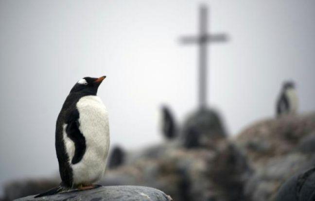 648x415 un manchot papou sur l ile de petermann dans l antarctique le 2 mars 2016