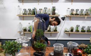 Ouvert fin 2014 à Paris, l'atelier Green Factory de Noam Levy est passé maître dans l'art du terrarium pour urbains pressés.