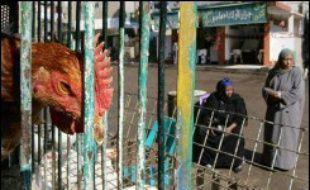 Un adolescent égyptien est décédé dans la nuit de lundi à mardi des suites du virus H5N1 de la grippe aviaire, portant à douze le nombre de personnes mortes après avoir contracté ce virus en Egypte, a annoncé le ministère égyptien de la Santé.