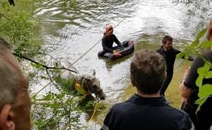 D'importants moyens de secours ont été déployés pour sauver un cheval tombé dans un cours d'eau, en Haute-Garonne.