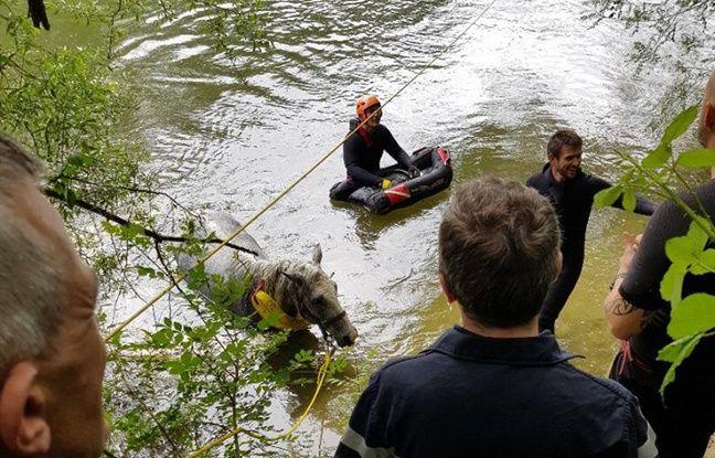 Haute-Garonne: Un cheval, tombé dans l'Ariège, sauvé des eaux par les pompiers