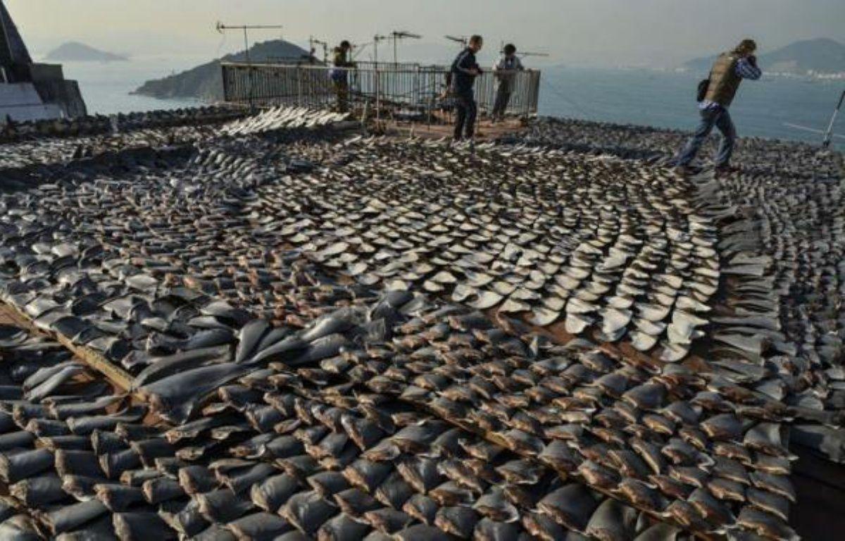 Les associations de défense de l'environnement ont de nouveau dénoncé jeudi à Hong Kong la pêche au requin après la découverte sur le toit d'une usine de milliers d'ailerons mis à sécher à l'approche du Nouvel An lunaire en Chine. – Antony Dickson afp.com