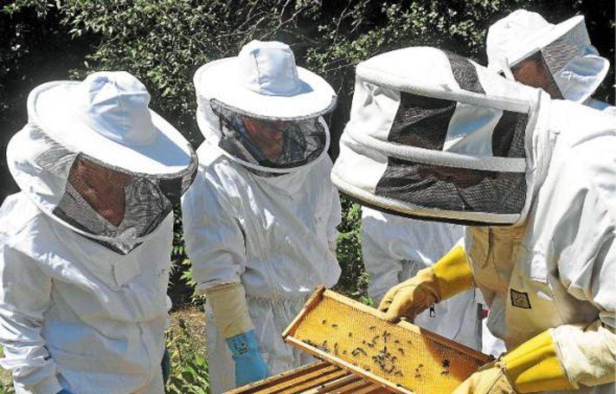 Cinquante personnes ont suivi les cours d'apiculture pendant six mois. –  r . gabalda / 20 minutes