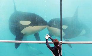 Le nouveau spectacle des orques, présenté ce jeudi