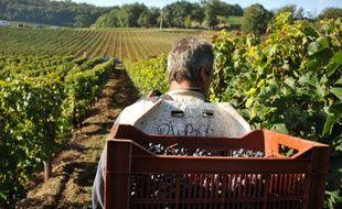 Depuis une dizaine d'années, le Bordelais multiplie les efforts en matière de développement durable, de la vigne à la bouteille.