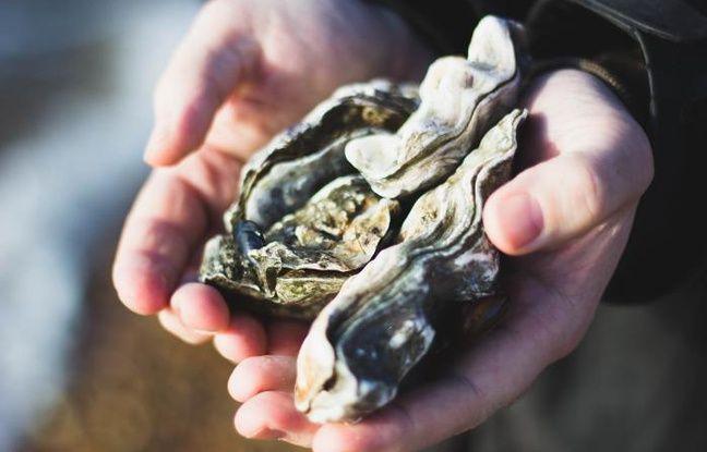 Deux huîtres
