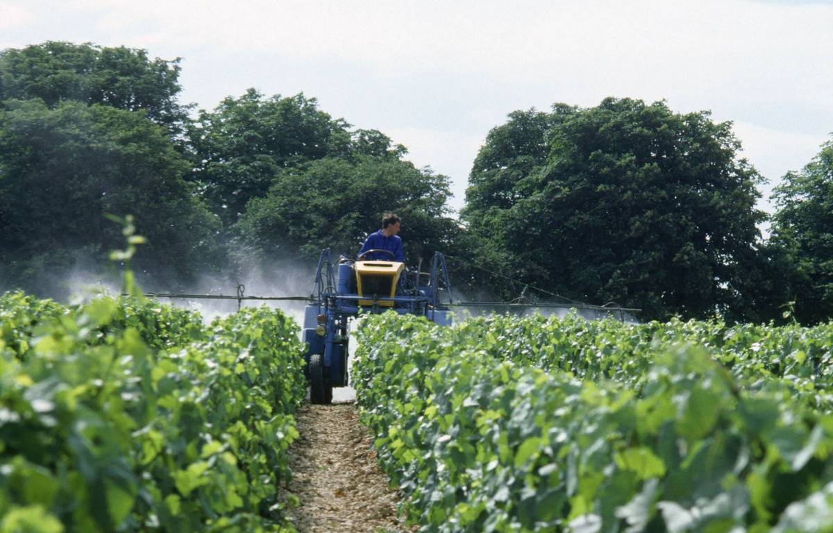 Illustration d'un épandage de pesticide dans une vigne. – Mary Evans / SIPA