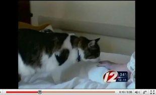 Capture d'écran d'un reportage sur Oscar, le chat d'une maison de retraite capable de prédire la mort des résidents