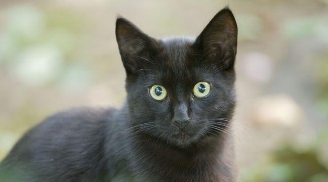 Pas-de-Calais: Un chat découvert mort avec un pieu dans la gorge, le propriétaire porte plainte