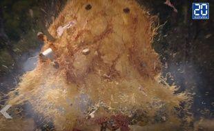 Schwarzy fait exploser un plat de spaghetti - Le Rewind (vidéo)