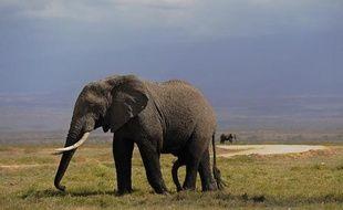 Un éléphant dans le parc Amboseli au Kenya, en octobre 2013