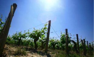 Le réchauffement climatique entraîne une augmentation des teneurs en alcool du raisin.