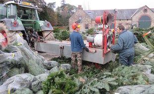 A quelques jours de Noël, c'est le grand rush au sein d l'entreprise Floval pour livrer à temps tous les sapins.