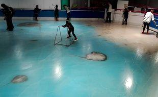 Les poissons figés dans la patinoire d'un parc d'attractions japonais ont provoqué un scandale sur internet.