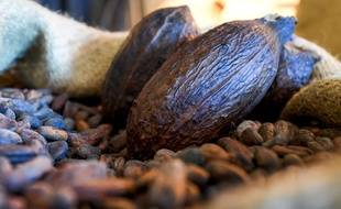 Des cabosses et des fèves de cacao (photo d'illustration).