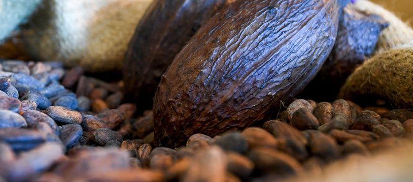 Des cabosses et des fèves de cacao (photo d'illustration).