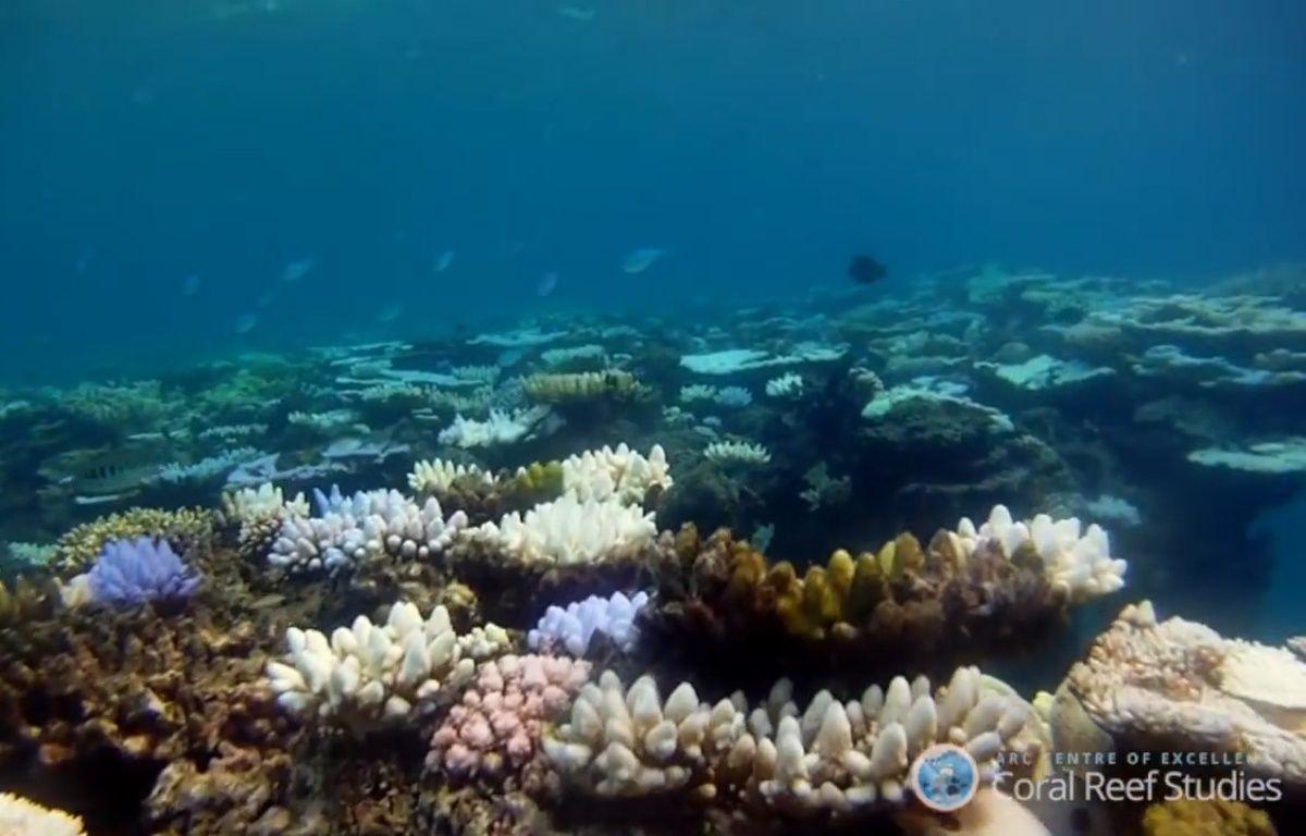 La Grande barrière de corail – Corail Reef Studies