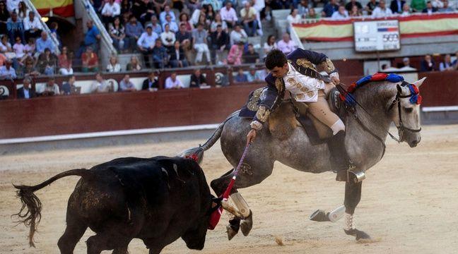 Un torero réputé soupçonné d'avoir maltraité ses 18 lévriers au Portugal