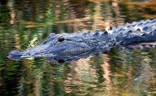 L'enfant de deux ans happé par un alligator en Floride est décédé et les recherches se poursuivent pour retrouver son corps 15 heures après sa disparition