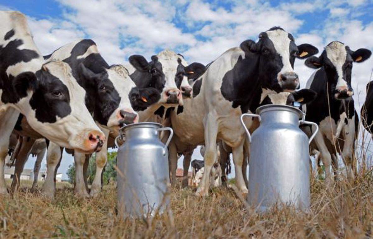 Des vaches laitières Holstein, dans le sud-ouest de la France. – AFP PHOTO JEAN-PIERRE MULLER