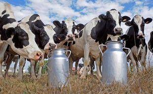 Des vaches laitières Holstein, dans le sud-ouest de la France.