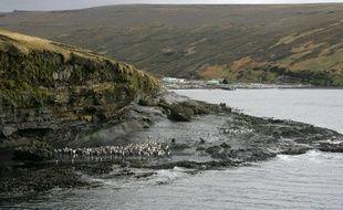 Un groupe de manchots sur l'île de la Possession dans l'archipel des Crozet (Terres Australes et Antarctiques Françaises) où est installée une base permanente française.