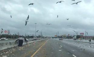 Une route de Houston après le passage de la tempête Harvey.