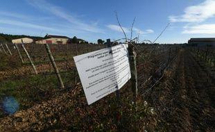 Sur une propriété de l'Institut national de la recherche agronomique (Inra), le 13 janvier 2016 à Gruissan dans l'Aude