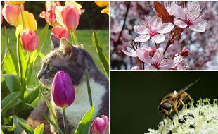 Un chat, des fleurs et une abeille qui butine, par nos internautes.