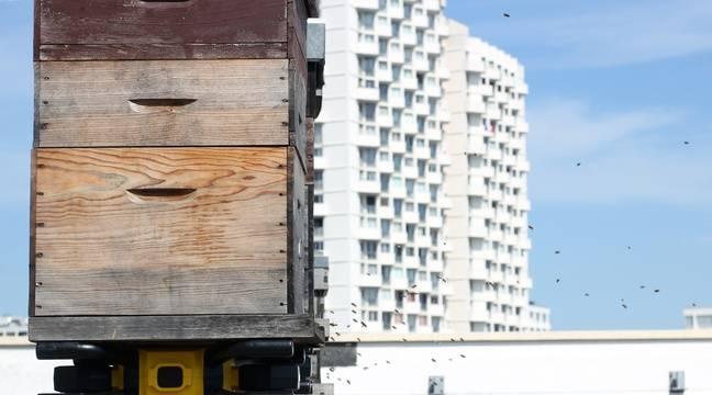 Rennes: La ruche connectée, nouveau système de lutte anti-intrusion contre les frelons