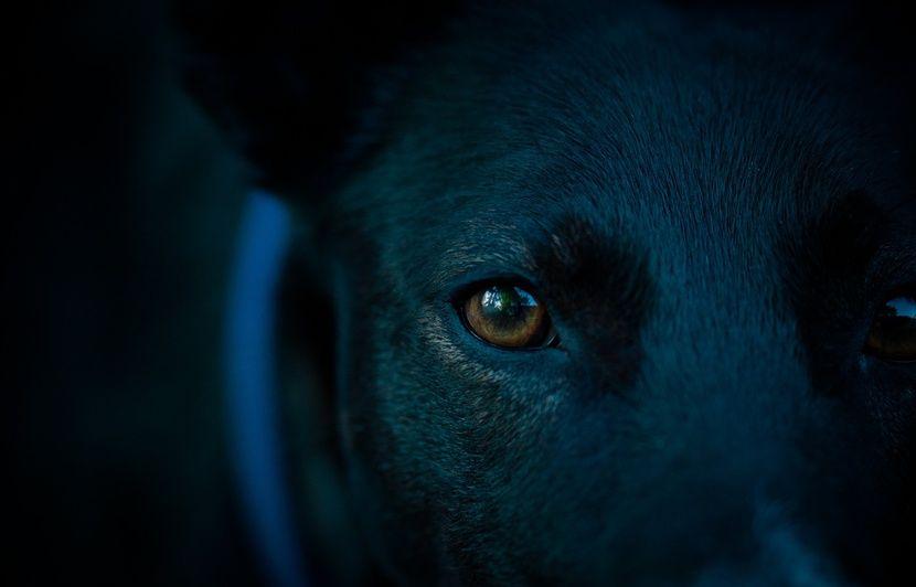 VIDEO. Grèce: Un chien refuse de quitter le bord de route où son maître s'est tué il y a un an et demi