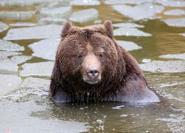 Guide de survie que faire face un ours