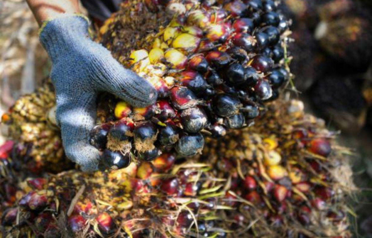 Une plantation d'huile de palme le 23 janvier 2016 à Aceh Jaya, sur la point nord de l'île de Sumatra, en Indonésie – CHAIDEER MAHYUDDIN AFP