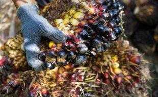 Une plantation d'huile de palme le 23 janvier 2016 à Aceh Jaya, sur la point nord de l'île de Sumatra, en Indonésie