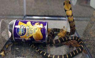 Des cobras ont été retrouvés dans des boîtes de chips par la douane américaine