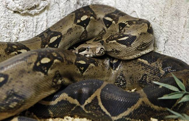 Paris: Un dresseur de serpent du Moulin Rouge décède, une autopsie demandée