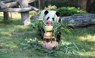 Yuan Meng, le petit panda du zoo de Beauval, déguste son gâteau d'anniversaire, le 4 août 2018.