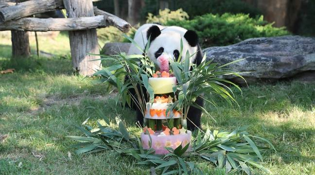 video zoo de beauval yuan meng le b b panda a f t son premier anniversaire avec ses fans. Black Bedroom Furniture Sets. Home Design Ideas