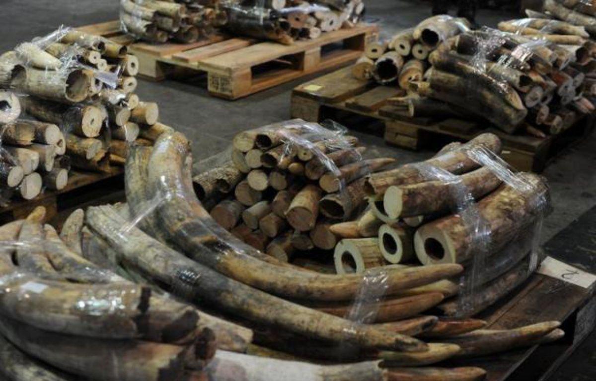Une famille de onze éléphants a été tuée au Kenya par des braconniers, a annoncé mardi le Service de la Faune kényane (KWS), affirmant être à la poursuite des auteurs de ce qu'elle décrit comme le plus important massacre de pachydermes au Kenya depuis plus deux décennies. – Dale de la Rey afp.com