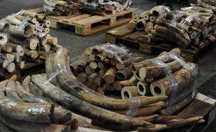 Une famille de onze éléphants a été tuée au Kenya par des braconniers, a annoncé mardi le Service de la Faune kényane (KWS), affirmant être à la poursuite des auteurs de ce qu'elle décrit comme le plus important massacre de pachydermes au Kenya depuis plus deux décennies.